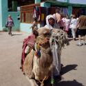Impressionen eines Ägypten-Urlaubs