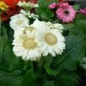 Welch eine schöne Blume. Doch was für eine Art ist dies eigentlich? Vergleichen Sie Ihre Aufnahmen später mit derer in Ihrem Botanikbuch.