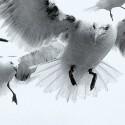 Bild in schwarz-weiß Optik