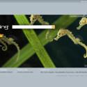 Der Bing Startbildschirm präsentiert sich mit einem täglich aktualisierten Hintergrundbild und ist auf das Wesentliche reduziert.