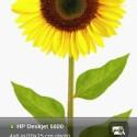 Mit iPrint Photo können Bilder vom iPhone über das WLAN-Netz zu einem Drucker von Hewlett Packard versendet werden