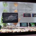 Wie die meisten Tablets und Smartphones von Fujitsu ist auch das Arrows F07D wasserfest. (Bild: netzwelt)