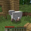 ... in die Welt. Ein Schaf möchte mit einziehen! (Bild: netzwelt)
