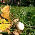 Welche Herbstimpression hat euch am gefallen? Stimmt jetzt ab!