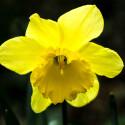 Einzelne Blüten frei zu stellen, kaschiert den in dem von Winter gezeichneten Park oder Garten. Der Blick wird auf die schöne Blüte gelenkt.