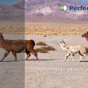 Perfectly Clear: Die 1-Klick-Fotoretusche ist auch für Fotografie-Anfänger einfach bedienbar. Mit nur einem Klick werden bis zu 18 Korrekturen automatisch vorgenommen und die Bilder verbessert. Die mühsame Bildbearbeitung entfällt. Dennoch sind auch manuelle Korrekturen möglich. 2,19 Euro gespart.