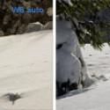 War der Schnee in Wirklichkeit nicht weiß? Die Kamera lag ein wenig daneben, diesmal beim Weißabgleich. Wenn Farbstiche auftreten, hilft ein manueller Weißabgleich auf den Schnee. Am besten eignet sich dafür eine Stelle, die im Schatten liegt.