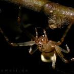 Oft werden feine Details, wie die Härchen dieser Spinnenbeine, erst durch die spezielle Beleuchtung so richtig deutlich.