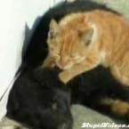 <a href=http://www.youtube.com/watch?v=pE9KgmRrQ8k target=blank>Ganz schön putzig, wie die Katze den Hund massiert</a> – ob der Hund das mag, erklärt die Stimme aus dem Off.