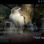 Die New York Times hat bereits eine App für Googles Datenbrille veröffentlicht. (Bild: Google+/Noble Ackerson)