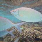 Der Sensor hat eine Auflösung von 16 Megapixeln. Die Aufnahmen sind auf den Malediven unter guten Lichtbedingungen entstanden. Das spezielle Unterwasserprogramm war aktiv. (Bild: netzwelt)
