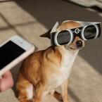 Mein Hund hat große Augen, sagt Brady Haran auf Twitter.