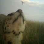 Leopardenbaby-Selfie