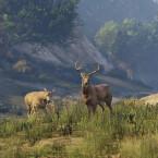 Rockstar verspricht mehr Wildtiere für die neuen Versionen von GTA 5.