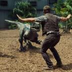 Nicht mehr ganz so gefährlich: Velociraptoren werden in Jurassic World trainiert.