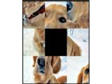 Icon: Schiebepuzzle Hunde