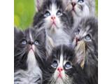 Icon: Cats!