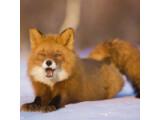 Icon: Fuchs und Hase