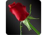 Icon: Flower Astro