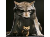 Icon: Kätzchen
