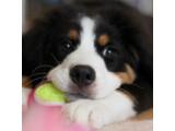 Icon: Hund Clicker