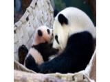 Icon: Po the Panda's Journey