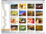 Bild: Mit StudioLine Photo Basic lassen sich Fotos übersichtlich katalogisieren.