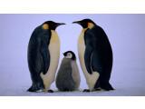 Bild: Schöne Tierbilder prägen die Seite