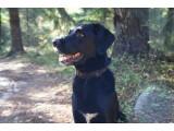 Bild: Mit dem GPS-gestützten Hunde-Navi könnte auch Redaktionshund Sunford bald nicht mehr auf seinen Besitzer warten und kann alleine durch die Wälder streunen.