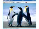 Bild: IrfanView ermöglicht das Betrachten von bis zu 60 Bildformaten.