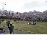 Bild: Der Koganei Park in Tokio kann nun in Street View betrachtet werden.