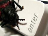 Bild: Wer ohne Schutz im Internet surft, läuft Gefahr sich einen Virus, Wurm oder Trojaner einzufangen.