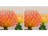Bild: Per Mausklick lässt sich der Fokus von Lytro-Bildern einfach ändern.