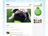 Bild: So wie Julius sollen sich bald 100.000 Tiere im Sozialen Netzwerk My Social Petwork präsentieren.
