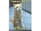 Bild: In einem SOPA-Protestsong wird das Ende der LOLCats besungen.