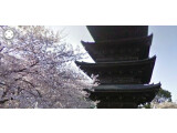 Bild: Der Street View-Guide gewährt einen Eindruck von Japan zur Zeit der Kirschblüte.