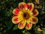 Bild: In diesem Tutorial erfahren Sie, wie die die Blüte dieses Bildes freistellen, um Sie ohne den Hintergrund zu verwenden.  Großbild