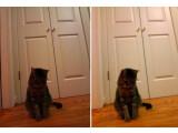 Bild: Das rechte Katzenbild wirkt dank des Software-Updates für die Google Glass-Kamera heller und kontrastreicher