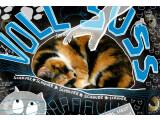 Bild: Voll Süüüß! Katzen im Internet.
