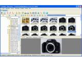 Bild: Der Bild-Browser von XnView