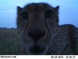 Bild: Serengeti 16