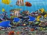 Bild: 3D Fish School Logo