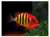 Bild: Aquarium 3D Logo