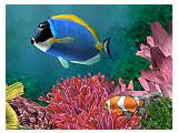 Bild: Aquarium-3D Logo