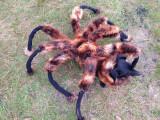 Bild: Ein Schrecken auf der Straße, auf YouTube ein Spaß für die Zuschauer: Der Hund im Spinnenkostüm.