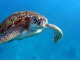 Bild: Wasserschildkröte