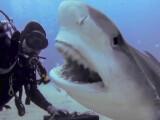 Bild: Die besten Actioncam-Videos von YouTube, Vimeo und Co.