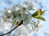 Bild: Der Frühling steht vor der Tür. Wie ihr die Blüten und Blumen des Frühjahrs fotografiert, lest ihr im Fototipp.