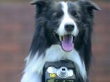 Bild: Nikon hat eine Kamera für Hunde entwickelt.