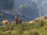 Bild: Rockstar verspricht mehr Wildtiere für die neuen Versionen von GTA 5.